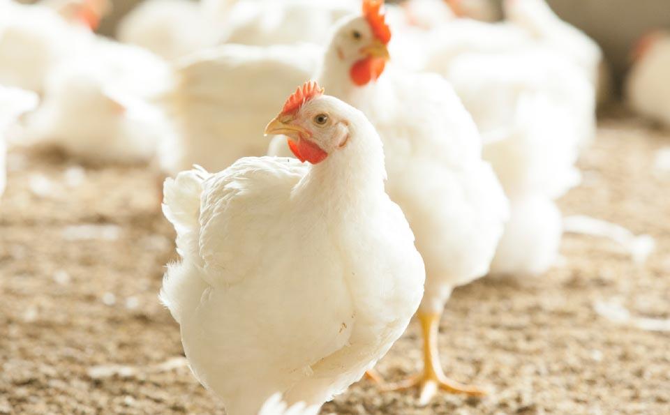 Antibioticabeleid-Plukon-Goor
